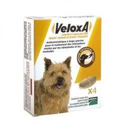 VELOXA Vermifuge pour chiens Boite de 4 comprimés à croquer